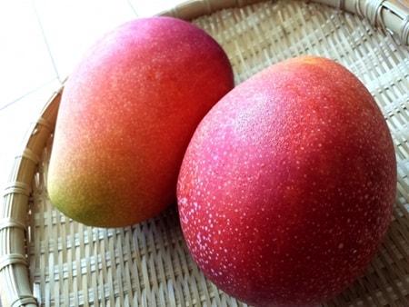 夏バテ対策にはマンゴー