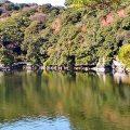 明神池の海面