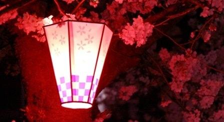 夜の花見は寒いので服装に注意