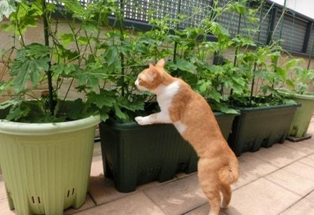 春は野菜を育てるチャンス