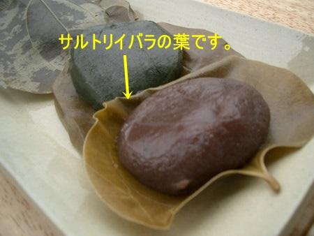 サルトリイバラの葉が昔は柏餅に使われていました