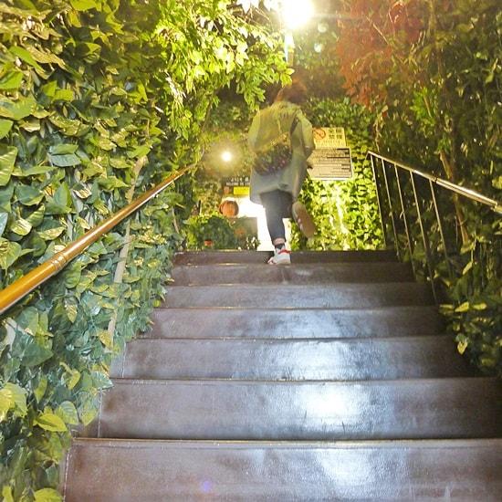 厳島ふくろうの森への階段